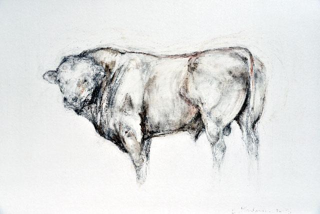 English Bull