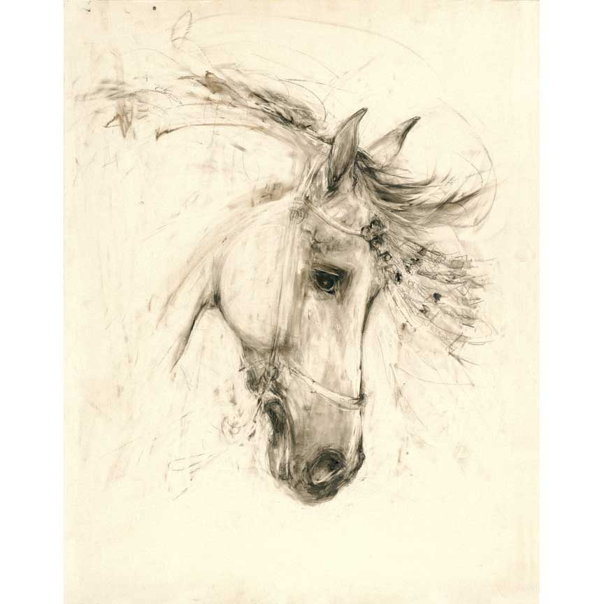 Andalusian Head