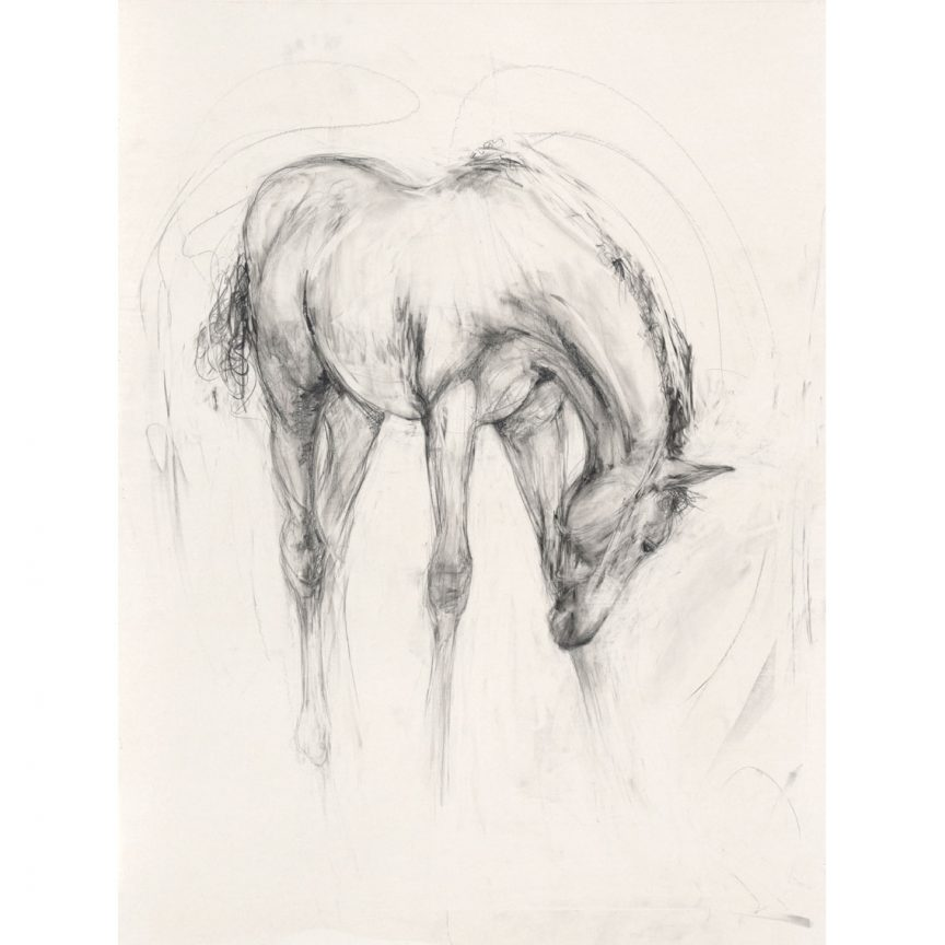 Foal (Portrait)