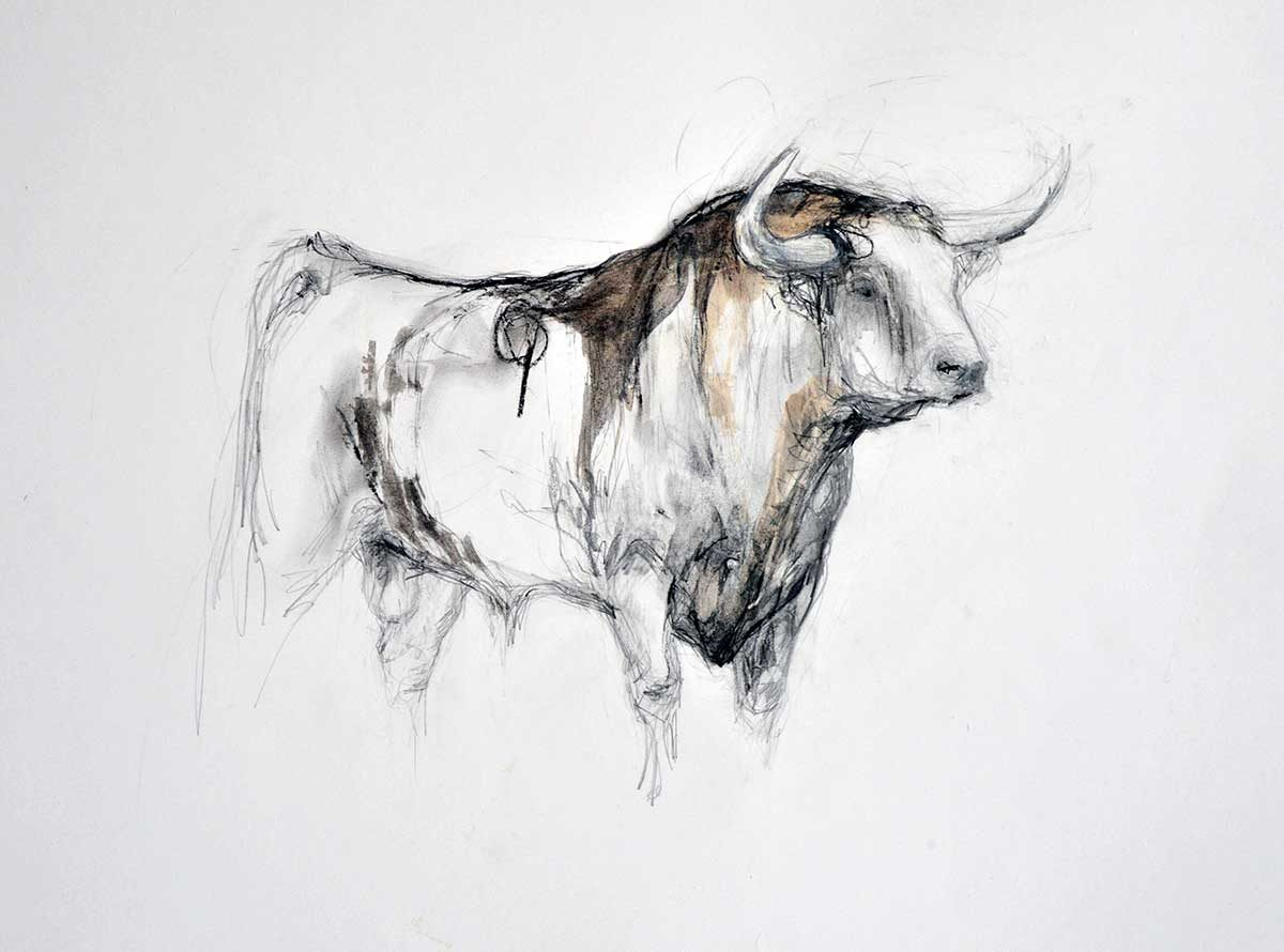 Small Bull Drawing