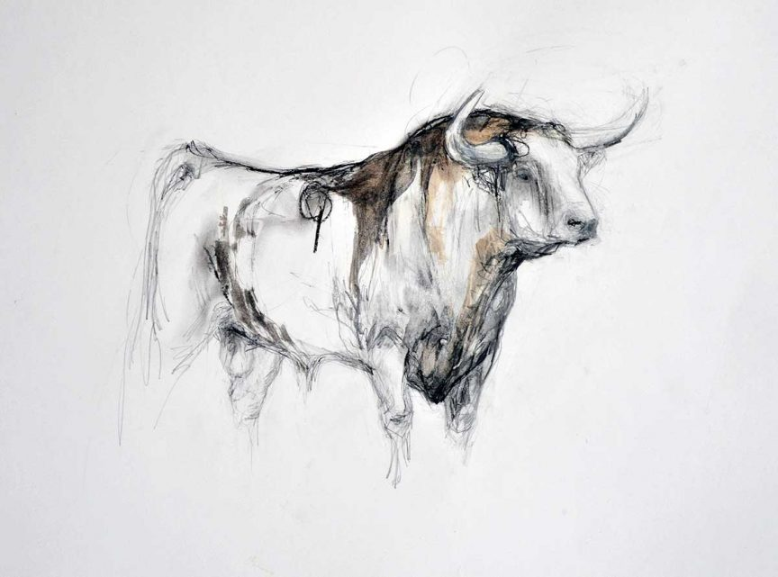 Small Bull Drawing