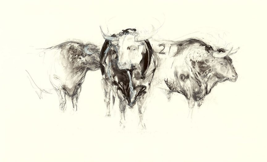 Three Spanish Bulls