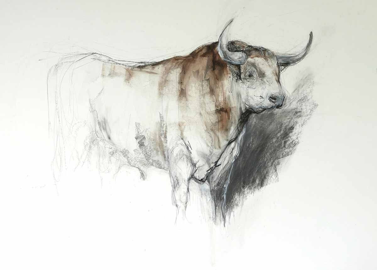 Very Big Brown Bull